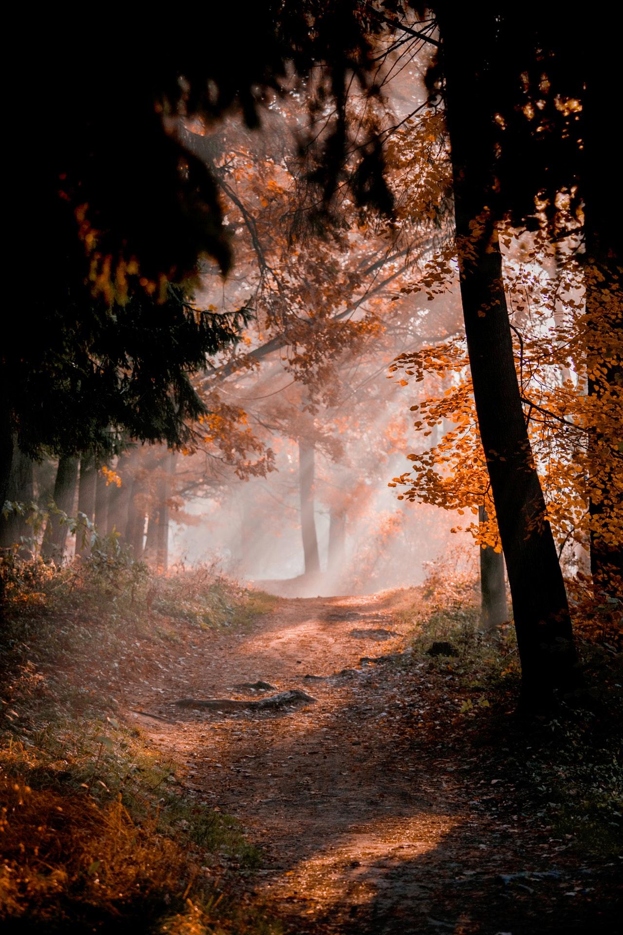 autumn-autumn-leaves-autumn-mood-forest-3132908 (1)